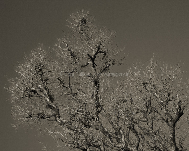 Branches 2_2008