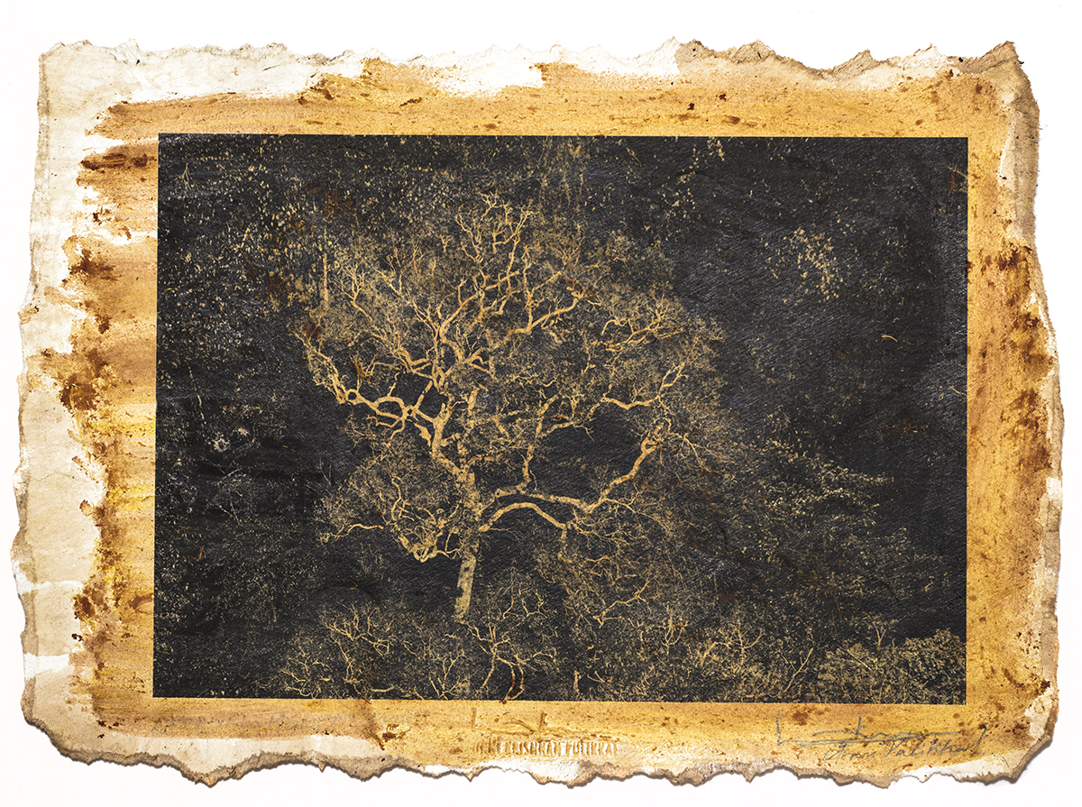 'Tree at Gudallur', printed 2016, stained 2018, pigment stained photograph,11 x 7.5 in, unique Edn.