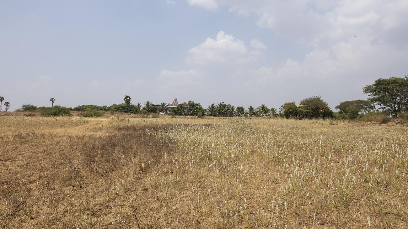 Vistas of Tamil Land_Pulikkal_Unni_4